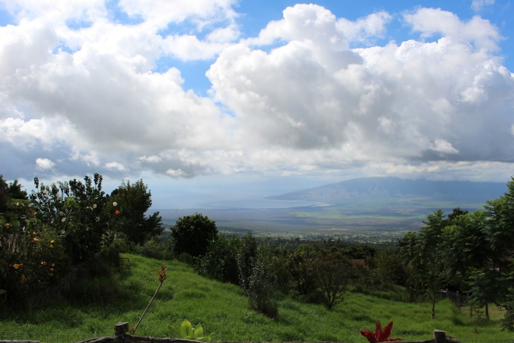 Maui upcountry